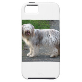 Bearded Collie Dog iPhone 5 Case