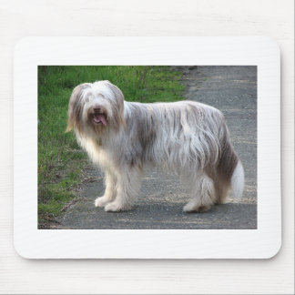 Bearded Collie Dog Mouse Pad
