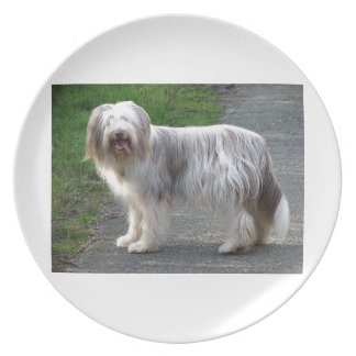 Bearded Collie Dog Plate