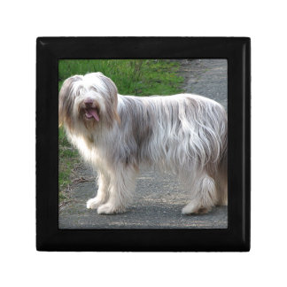 Bearded Collie Dog Small Square Gift Box