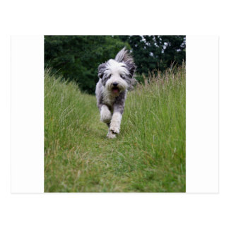 bearded collie in motion.png postcard