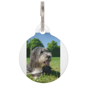 bearded-collie laying 2 pet tag
