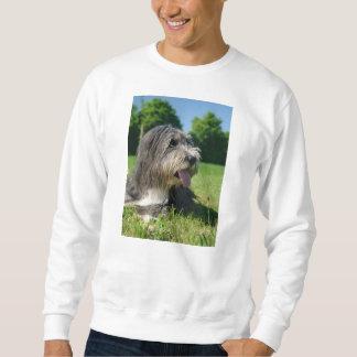 bearded-collie laying 2 sweatshirt