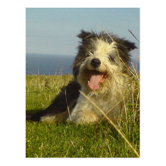 Bearded Collie laying.png Postcard