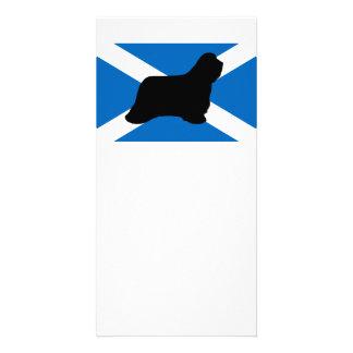 bearded collie silhouette Scotland flag Photo Card