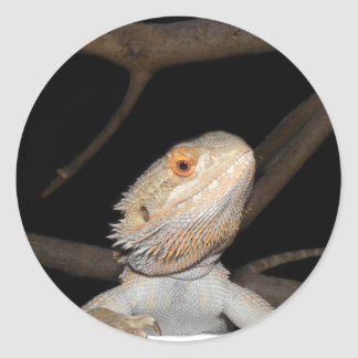 Bearded dragon 2 classic round sticker