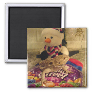 bearded dragon and snowman square magnet
