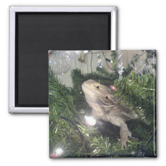 bearded dragon in xmas tree square magnet