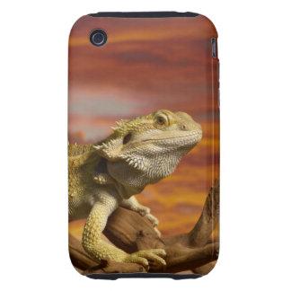 Bearded dragon (Pogona Vitticeps) on branch, Tough iPhone 3 Covers