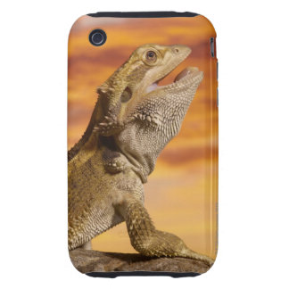 Bearded dragon (Pogona Vitticeps) on rock, Tough iPhone 3 Case