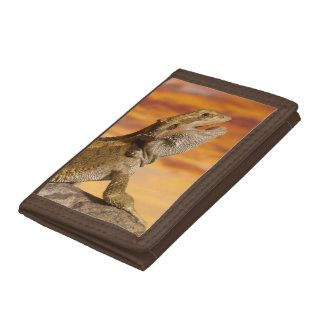 Bearded dragon (Pogona Vitticeps) on rock, Trifold Wallet
