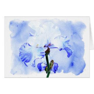 Bearded Iris - Blue And White Card