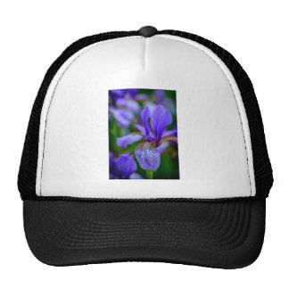 Bearded iris cap