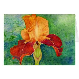 Bearded iris card
