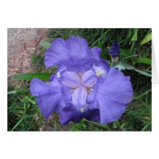 Bearded Iris Cards