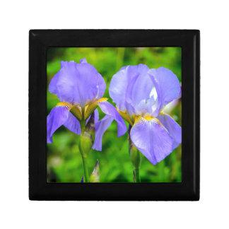 Bearded Iris Gift Box