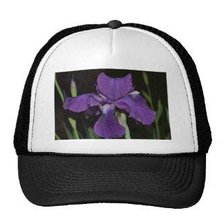 Bearded Iris in Purples Cap
