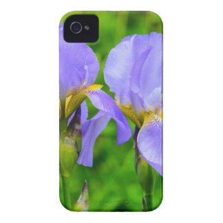 Bearded Iris iPhone 4 Case
