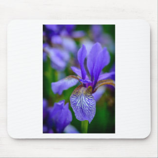 Bearded iris mouse pad