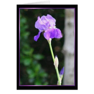 Bearded Iris Notecard Note Card