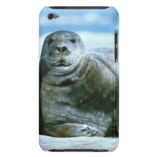 Bearded Seal iPod Touch Cases