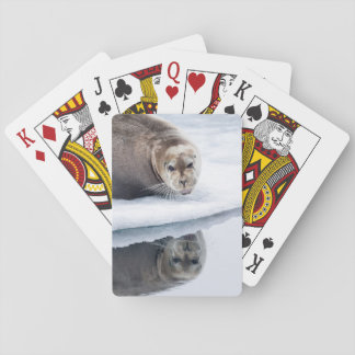 Bearded seal on ice, Norway Poker Deck