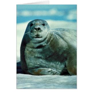 Bearded seal portrait card