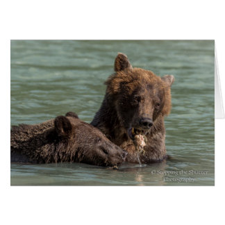 Bears of Alaska - Blank Note Card