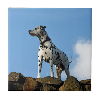 Beau Dog Ceramic Tile