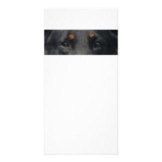 Beauceron eyes photo cards