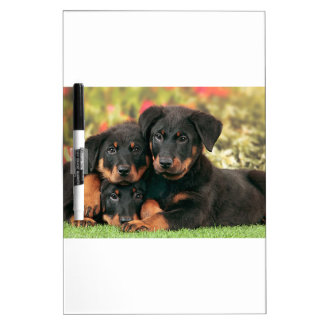 Beauceron Puppies Best Buds Dry Erase Board