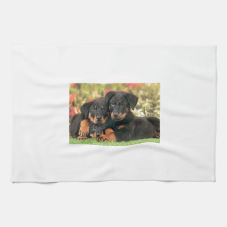 Beauceron Puppies Best Buds Tea Towel