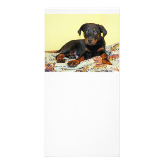 beauceron puppy personalized photo card