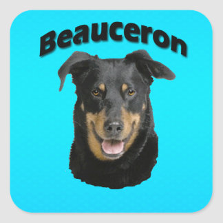 Beauceron Turquoise Square Sticker