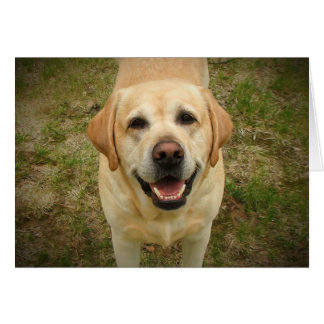 Beautiful and Happy Yellow Labrador Retriever Card