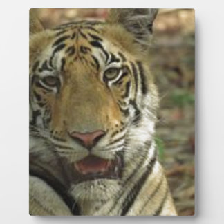 Beautiful and Smiling Tiger Photo Plaque