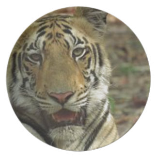Beautiful and Smiling Tiger Plate