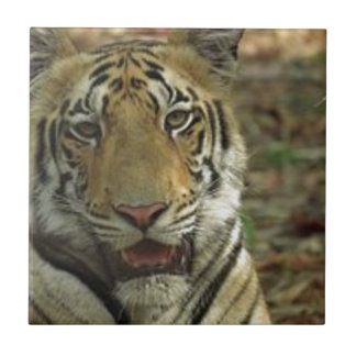 Beautiful and Smiling Tiger Small Square Tile