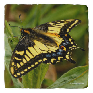 Beautiful Anise Swallowtail Butterfly in the Grass Trivet