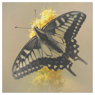 Beautiful Anise Swallowtail Butterfly in the Sun Fabric