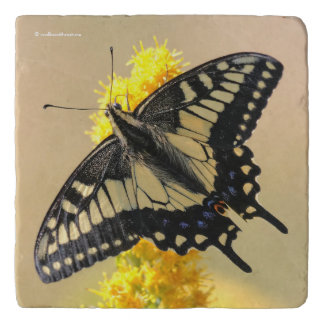 Beautiful Anise Swallowtail Butterfly in the Sun Trivet
