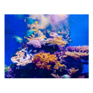 beautiful Aquarium Postcard