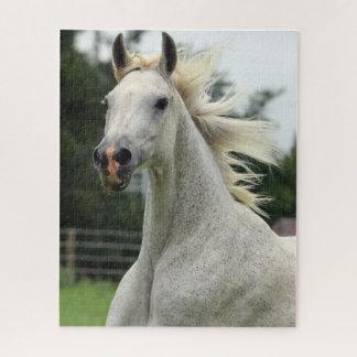 Beautiful Arabian Horse Puzzle