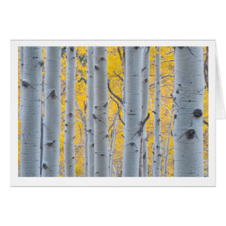 Beautiful Aspen Trees Card