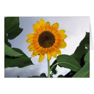 Beautiful Autumn Beauty Sunflower Greeting Card