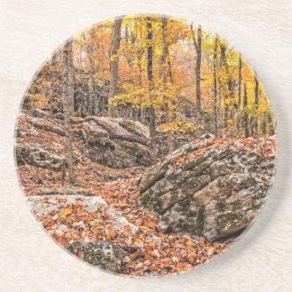 Beautiful Autumn Forest Coaster