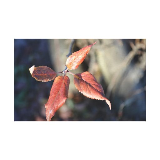 Beautiful Autumn Leaf Canvas Print