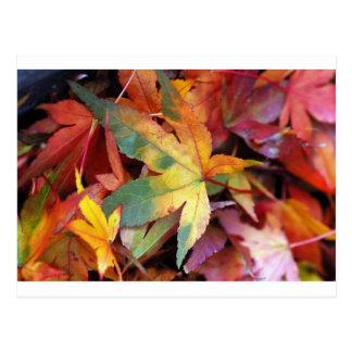 Beautiful autumn leaves print postcard
