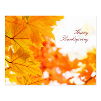 Beautiful Autumn Thanksgiving Postcard