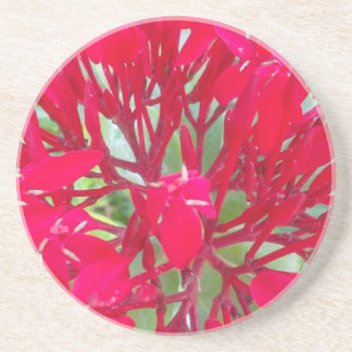 Beautiful Awesome Red flowers Coasters